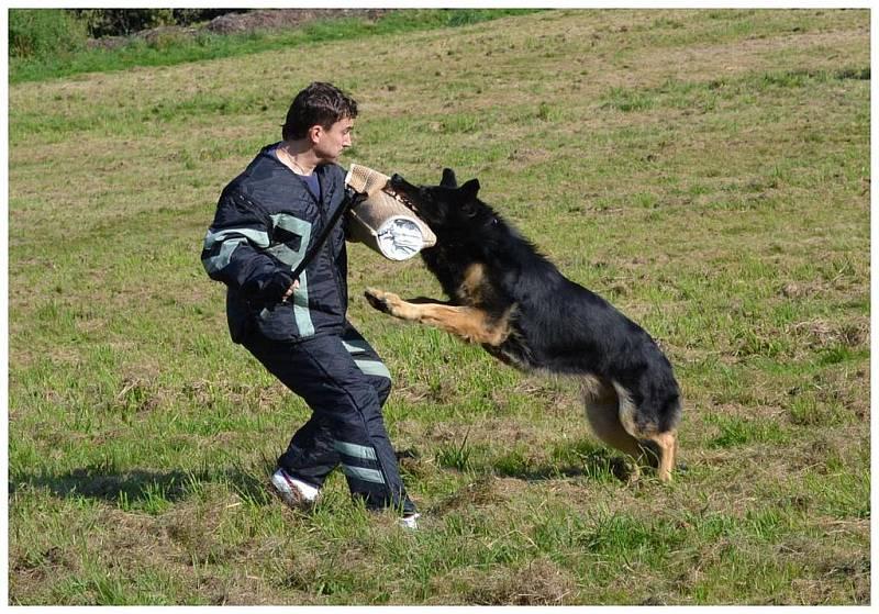 30. ročník soutěže psů O liberecký pohár