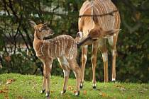 V zoo se rodí mláďata i na podzim.