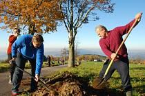 TAM KDE STROMY CHYBÍ, VYSADÍME NOVÉ. V minulém roce měl projekt velký úspěch. Zapojilo se do něj 33 měst, obcí a škol. Doplňovaly se například stromy do aleje, která už byla značně prořídlá.