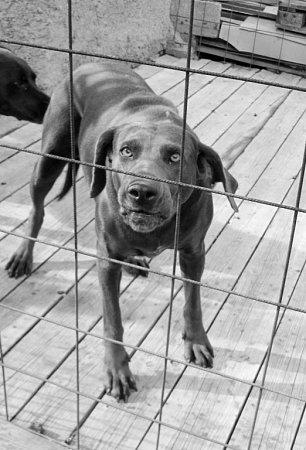Jeden ze psů vkotci