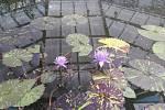 Botanická zahrada v Liberci.