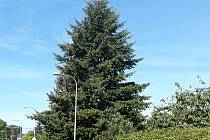 Strom, který bude zdobit liberecké náměstí.