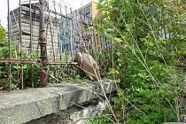 Srnec uvízl v plotě. Pomohli mu hasiči z Hejnic a Raspenavy
