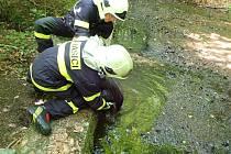 Záchrana psa v Libverdě.