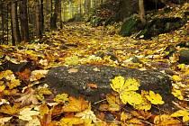 Podzimní cesta.