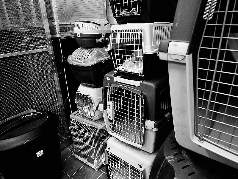 Archa – Centrum pro zvířata v nouzi