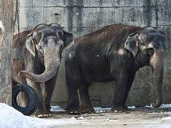 Pavilon slonů v liberecké zoo.