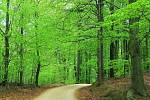 Zelené kouzlo Jizerskohorských bučin nad Štolpišskou cestou.