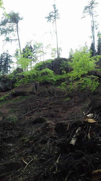 Čištění lesa.