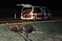 Podle zasahujících záchranářů se jednalo o losa, který se do Česka nejspíš zatoulal z Polska.