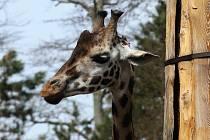 Zoologická zahrada v Liberci. Ilustrační foto.