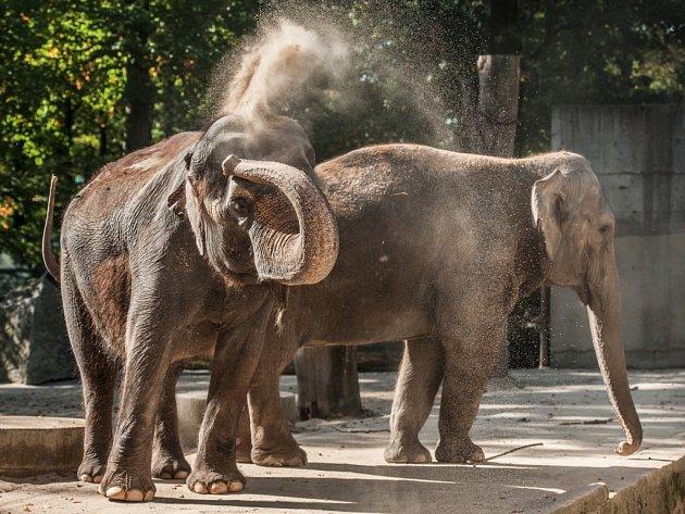 ZOO Liberec nová slonice Bala se s libereckou Rání prakticky okamžitě skamarádí.
