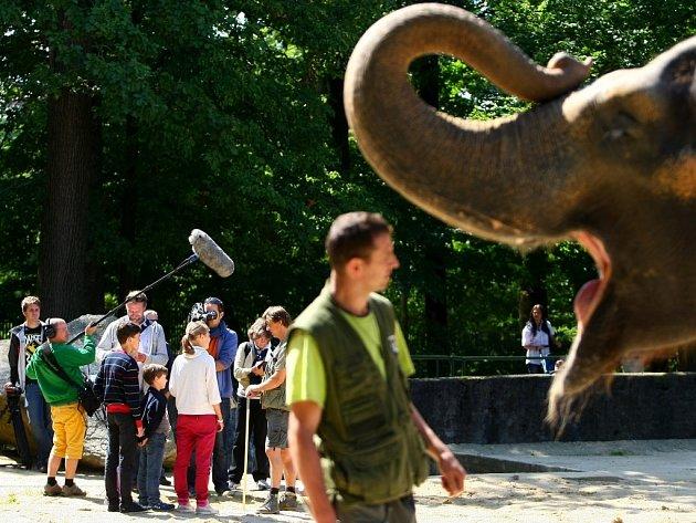Česká televize natáčí v liberecké zoo materiál do pořadů dětské televize.