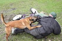 PSOVOD poslal psa na pachatele na kole.