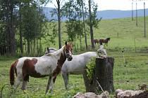 Byli agresivní, nemocní, hrozila jim jatka, nikdo je nechtěl. Řeč je o koních, o něž se už šest let stará Nikola Kňavová z Ferdinandova u Hejnic.