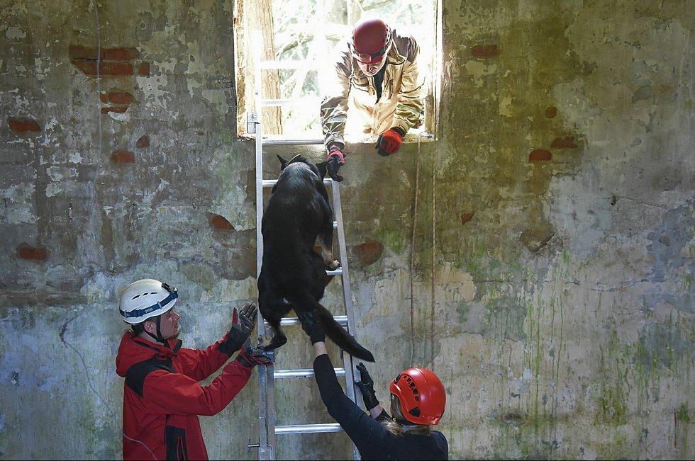 Kynologové cvičili v bývalém vojenském prostoru Ralsko.