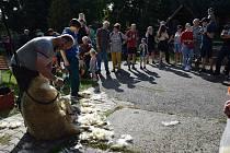 Svatováclavská výstava koz a ovcí.
