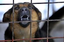 TÝRANÍ psi končívají v útulcích, kde čekají na nové majitele.