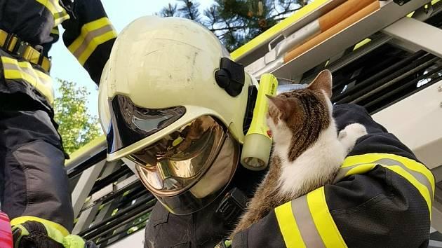 Nejen požáry. Hasiči pomáhají i zvířatům, v Liberci zachránili kočku