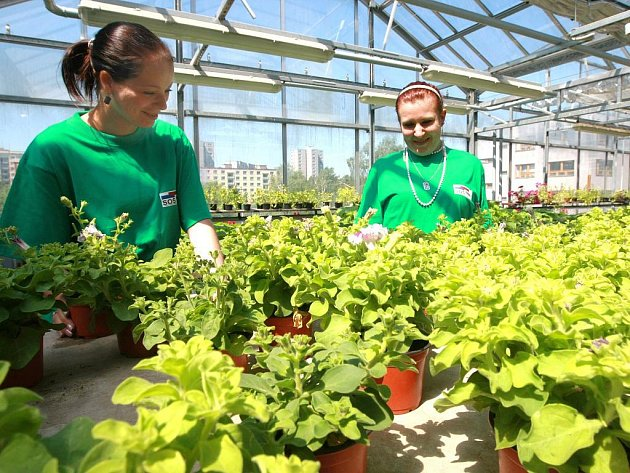 V areálu školního zahradnictví pracují žáci oboru zahradnické práce. Pod vedením učitelů odborného výcviku pěstují květiny a zeleninovou sadbu, věnují se též aranžování a vazbě květin.