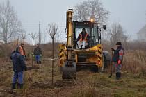 DVACET nových stromů už krášlí okolí Albrechtic.