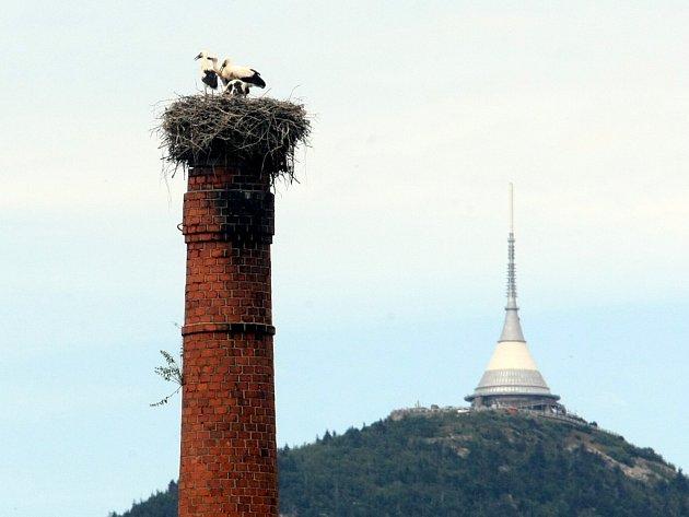 Čápi na komíně v Osečné