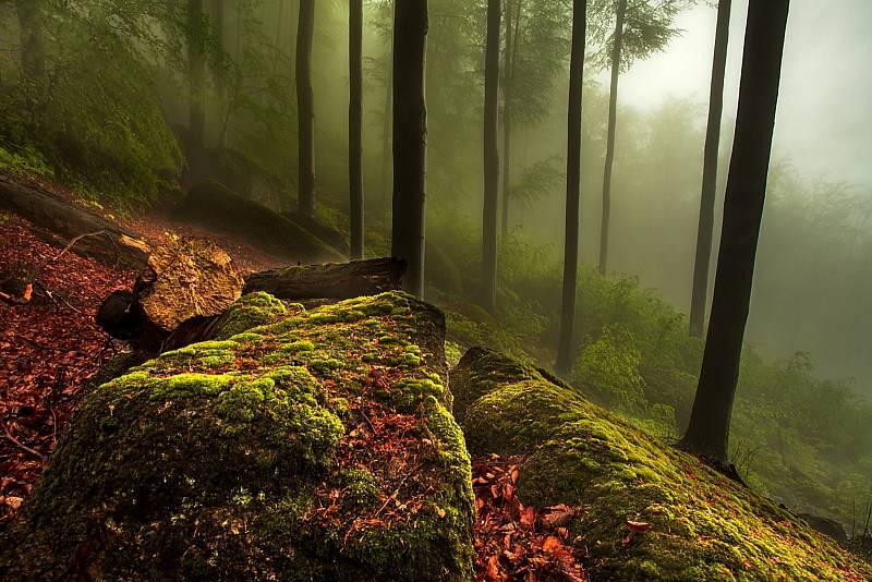 Tajemný les.