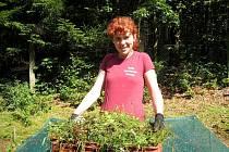 DOBROVOLNÍCI pomáhají občanskému sdružení Čmelák s péčí o původní druhy stromů, jako jsou například buk nebo jedle.  Práci berou jako dobrou zkušenost.