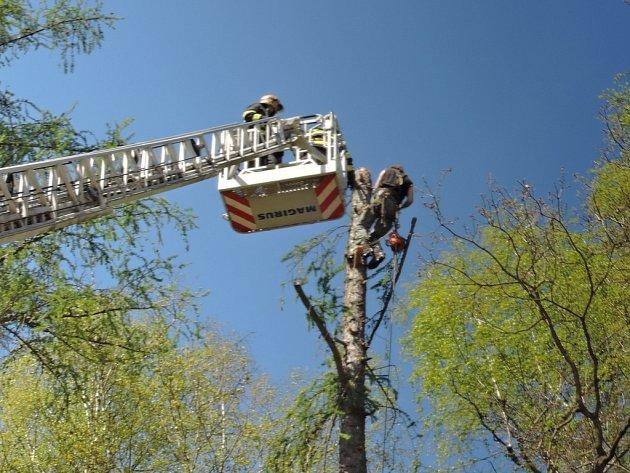 Dřevorubec zůstal uvězněný na stromě