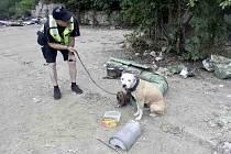 Opuštěného nevraživého psa našli asistenti prevence kriminality u řeky.