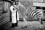 Liberecká zoo shání fotky zeber