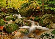 Radostný podzim.