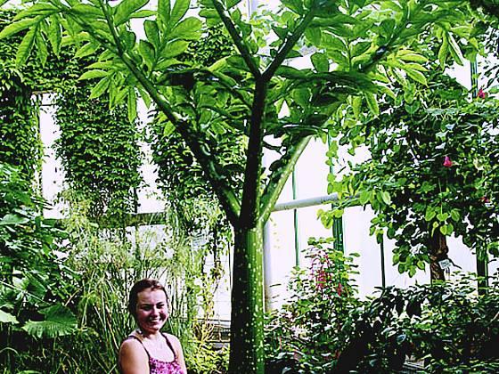 Zmijovec v liberecké Botanické zahradě.