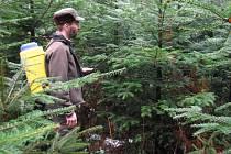 TEN VÁM DOMA PO JEHLIČÍ VONĚT NEBUDE. Lesníci stříkají stromky na Frýdlantsku speciálním páchnoucím odérem.