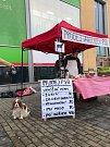 Prodej vánočních psů měl poukázat na utrpení kaprů.