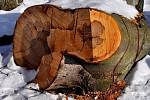 Šťastná ruka dřevorubce.
