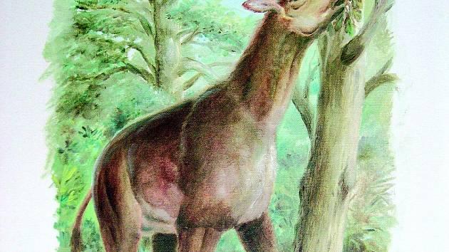 SCHIZOTHERIUM bylo lichokopytným býložravcem, velikým zhruba jako dnešní los. Dospělý jedinec vážil 1000 až 1200 kg.