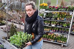 PLNÉ RUCE PRÁCE mají teď zahradníci. Lidí je kvůli bezpečnostní situaci málo. Na rozdíl od květinářství ale mohou doufat, že zahradní sadba nepřijde k újmě a po Velikonocích o ni bude mezi zahrádkáři zájem.