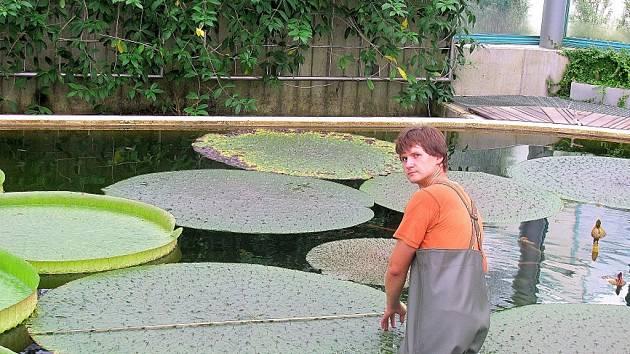 List obrovité euryalé vzdorné dosáhl při posledním měření 193 centimetrů.