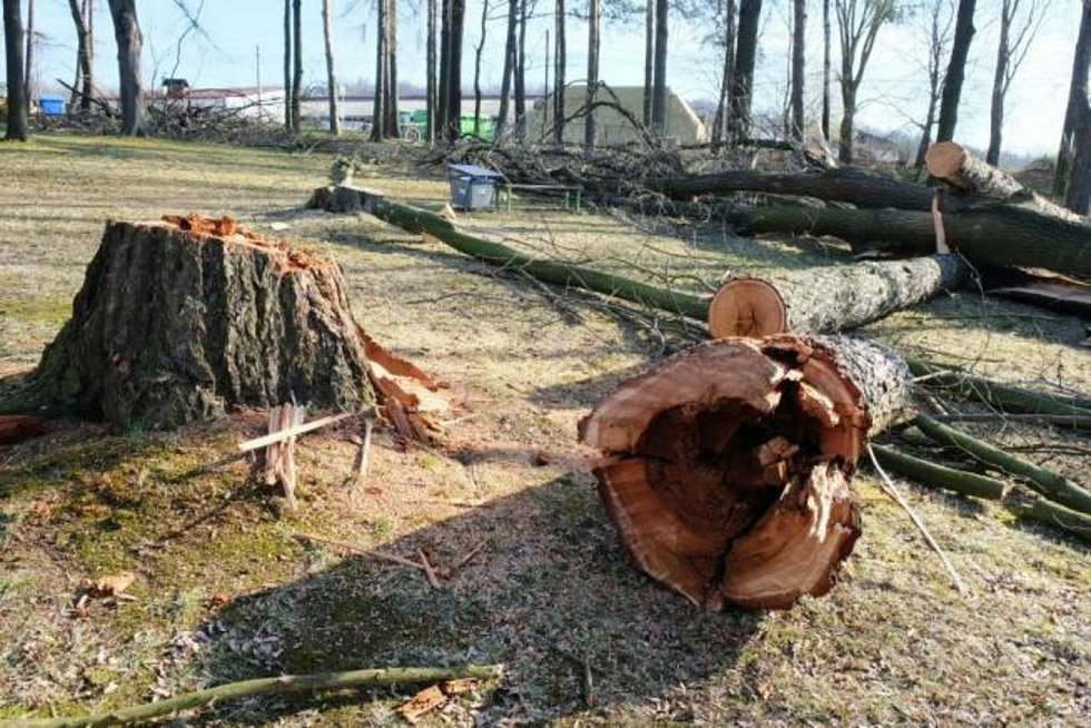 V parku pod hřbitovem pokáceli rizikové stromy.