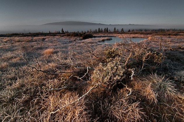 Jan Měchura: Velká jizerská louka - rašeliniště