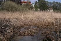 Mokřady u zámku Nový Falkenburk v Jablonném v Podještědí. Pozemek koupilo sdružení Čmelák a chce jej zvelebit.