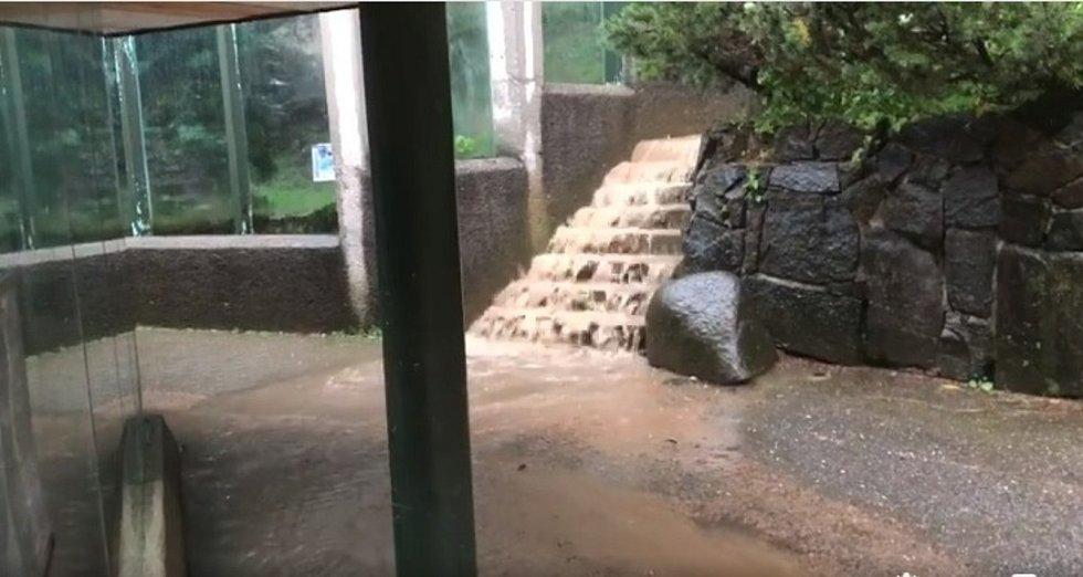 Sobotní deště nezpůsobily v Zoo Liberec významnější škody.