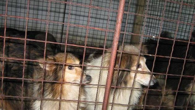 Psi zachránění z množírny v Dešné na Dačicku.