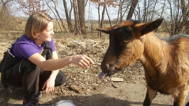 Zázračně uzdravená koza Róza ze záchranné stanice v Třeboni hlásí: jaro je tu!