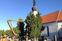 KVŮLI BEZPEČNOSTI provádějí pracovníci technických služeb úpravy stromů na třeboňském hřbitově.