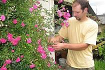 Zahradník Radovan Hájek z jindřichohradeckého Florianusu kontroluje květy růže.