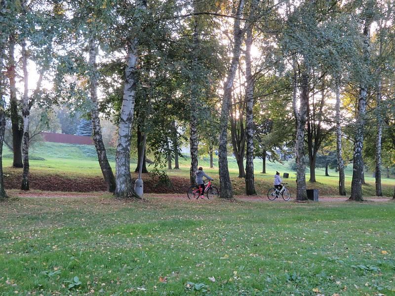 Sakury na náměstí a břízy v městském parku ve Slavonicích.