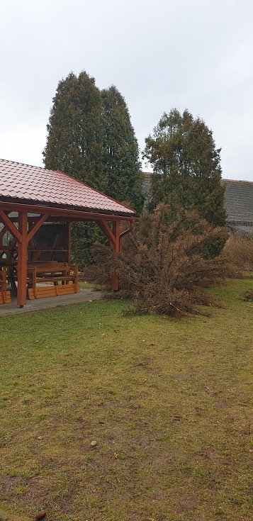 Polom na zahradě Základní školy Komenského v Dačicích.