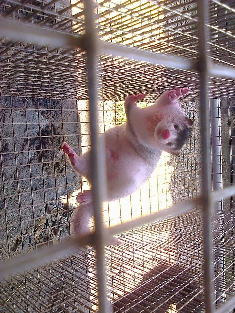 Vandalové nastříkali zvířata růžovou barvou.
